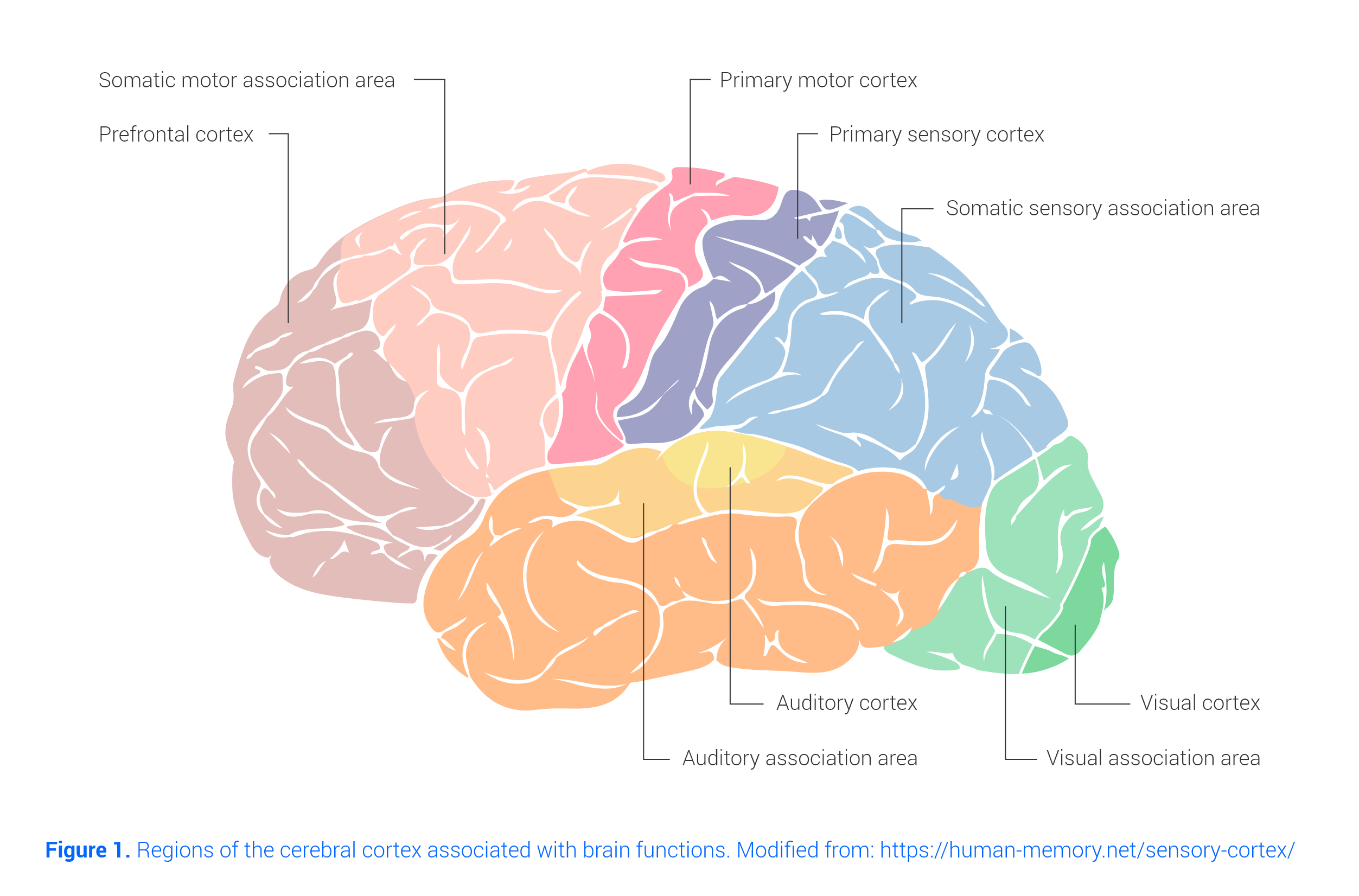image of the brain areas